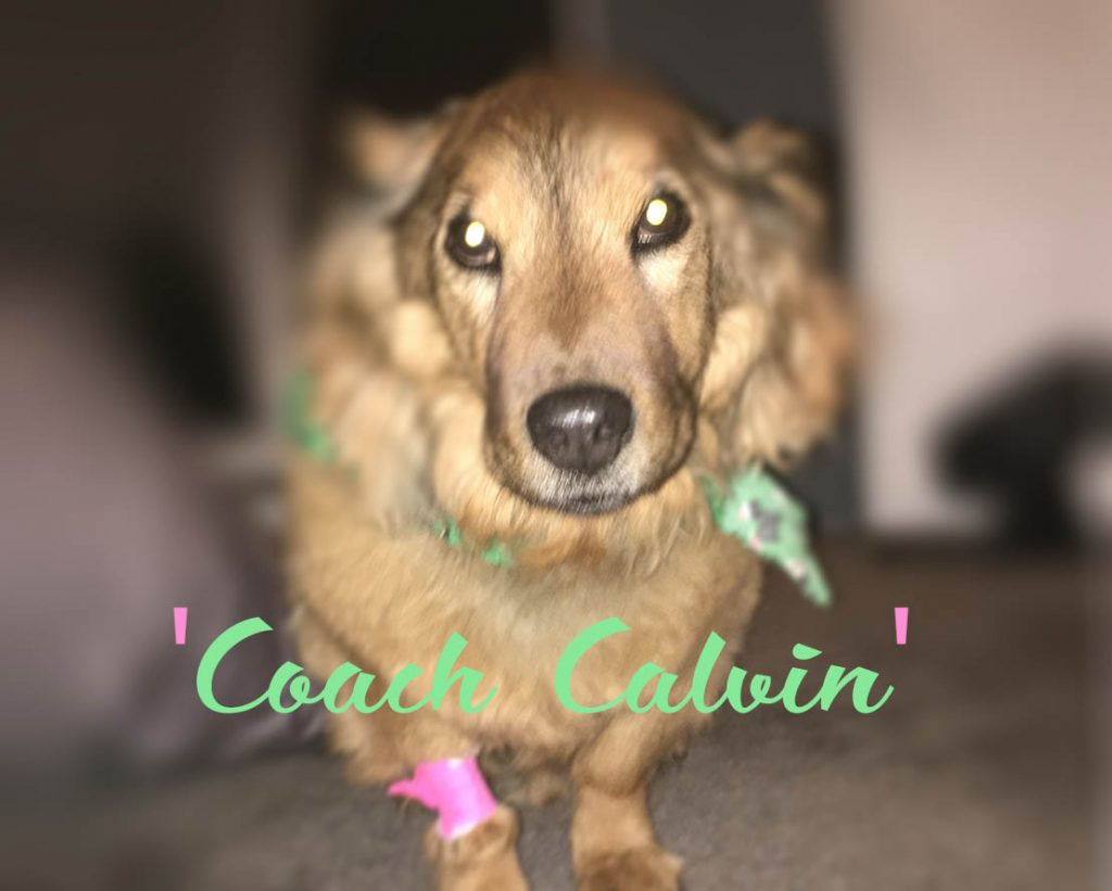 Coach Calvin [dog]
