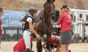 Germany's Ingrid Klimke after cross country at the World Equestrian Games