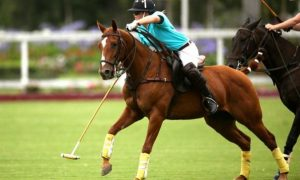 Danielle Travis_chestnut polo pony